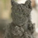 gatto polvere