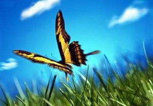 Questa farfalla arriva da qua